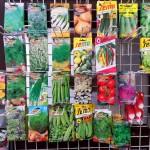 Semena - zelenina