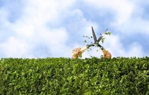 Stříhání živého plotu - ilustrační obrázek